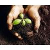 Грунт растительный,  плодородный,  торфяной,  чернозем